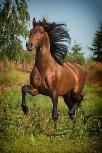 Bilder Von Pferden : die 25 besten ideen zu sch nste pferde auf pinterest h bsche pferde pferde und bilder von ~ Frokenaadalensverden.com Haus und Dekorationen