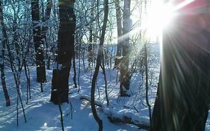 Sunny Forest Winter Wallpapers Desktop Background Sunbeam