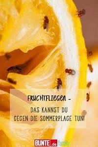 Obstfliegen Bekämpfen Hausmittel : die besten 25 obstfliegen hausmittel ideen auf pinterest hausmittel gegen obstfliegen ~ Watch28wear.com Haus und Dekorationen