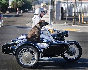 36 best dogs + motorcycle sidecars images on Pinterest ...