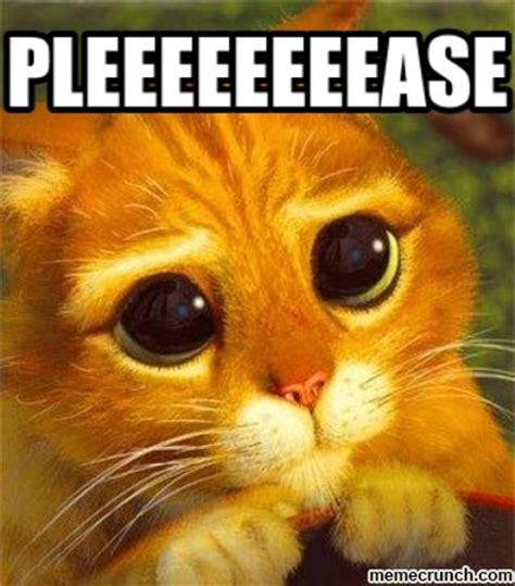 Cute Kitten Says Please