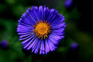 September Flowers Blue