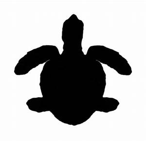 Silhouette of Green Sea Turtle (Chelonia mydas) | Turtle ...