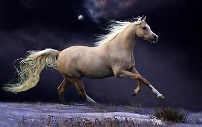 Horse Seven Desert Moon Animal Wallpapers