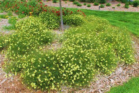 sun border plants top 10 perennials steinbrink landscaping greenhouses