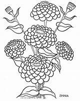 Coloring Zinnia Flower Flowers Drawing Tulip Silhouette Qisforquilter Goodall Getcolorings Jane Getdrawings Printable Drawings Designlooter Colouring Finds Children Embroidery Quilter sketch template
