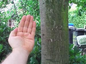 Wann Apfelbaum Pflanzen : baumschnitt apfel baumschnitt der richtige schnitt macht ~ Lizthompson.info Haus und Dekorationen