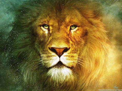 lion wallpapers hd desktop background