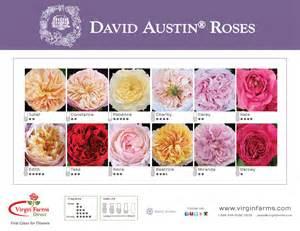 peonies wholesale farms garden roses