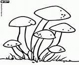 Fungi Coloring Pages Fungus Oncoloring Mushrooms Printable Games Credit Larger Mushroom sketch template