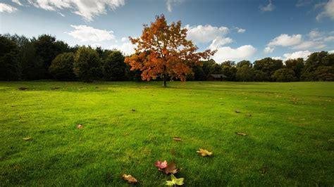 green, Natural, Landscape, Tree Wallpapers HD / Desktop ...