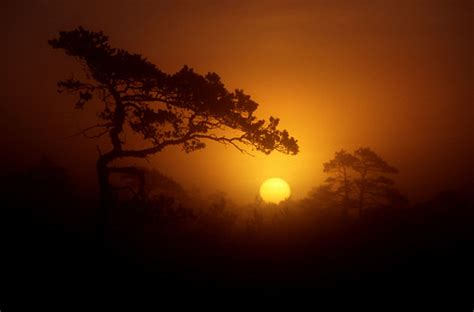 gorgeous sunrise photography