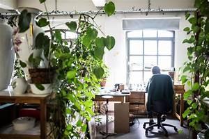 Pflanzen Luftreinigung Schlafzimmer : pflanzen am arbeitsplatz zur inspiration und luftreinigung pflanzenfreude ~ Eleganceandgraceweddings.com Haus und Dekorationen