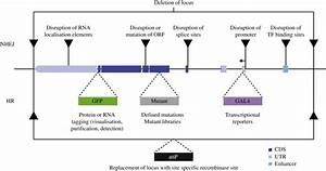 Uses Of Genome Editing Within Protein Coding Genes
