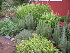 Herb Garden Design by Planning An Herb Garden Nelsons Herb 39 S Blog