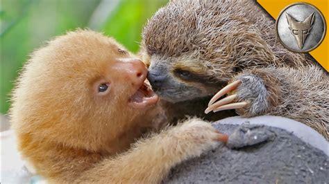 Sloth Images Sloth Vs Sloth