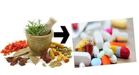 tanaman herbal sebagai bahan baku obat apotekers