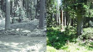 Mount St. Helens: 35 years after eruption, nature returns ...