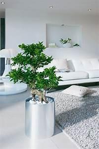 Sichtschutz Pflanzen Pflegeleicht : dekorieren sie ihr zuhause mit sch nen zimmerpflanzen die ~ A.2002-acura-tl-radio.info Haus und Dekorationen