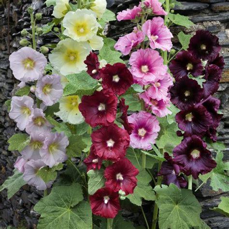 tr 233 mi 232 re en m 233 lange de coloris fleurs simples plantes et jardins