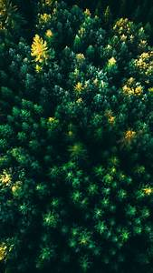 Green, Trees, Wallpaper, 4k, Forest, Aerial, View, Greenery