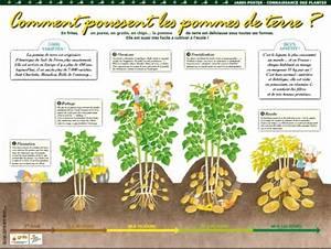 Période Pour Planter Les Pommes De Terre : activt s pour la classe plantes aromatiques et ~ Melissatoandfro.com Idées de Décoration