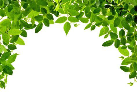 Ps高清绿色背景素材_图片大全
