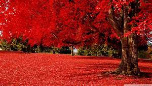 Photo Collection Fall Nature Hd Wallpapers 1080P