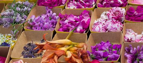cuisiner avec les fleurs 28 images julien cuisiner