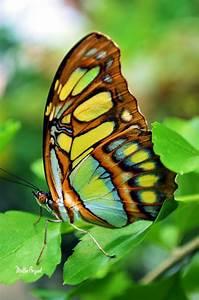 colorful   Mattie Bryant Photography