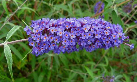 nomi di fiori nomi di fiori viola significato fiori nomi di fiori