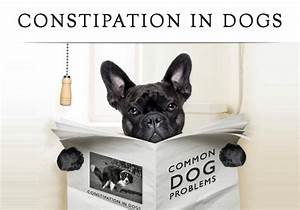 is your dog constipated check out the solution