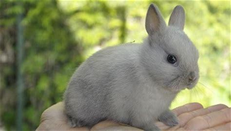p 233 tition contre la vente mensong 232 re de lapins extra nains