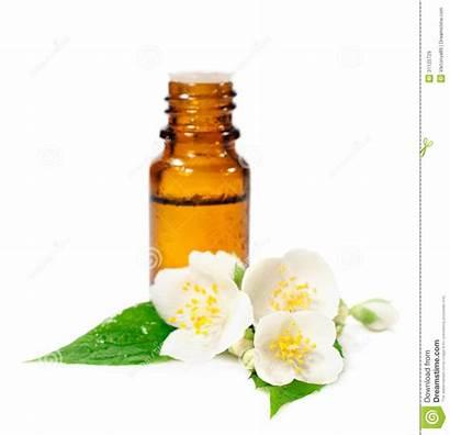 Essential Oil Clipart Bottle Jasmine Flowers Oils