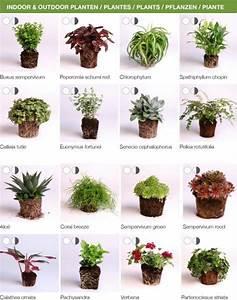 die besten 25 vertikal ideen auf pinterest vertikal With französischer balkon mit pflanzen für vertikale gärten