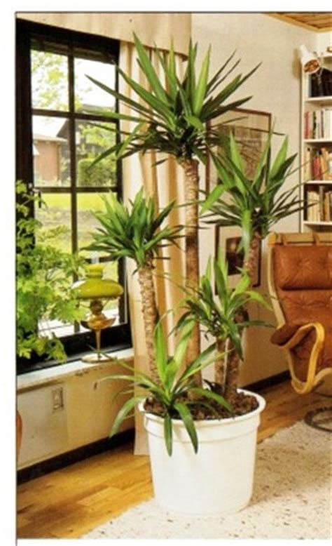 Flowering House Plants For Windows by Growing Plants At A Facing Window