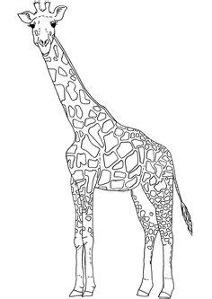 giraffe coloring pages images giraffe coloring