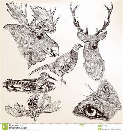 Animals Drawn Hand Vector Detailed Deer Drawing