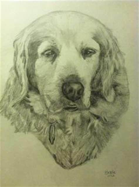 drawings sketches  pinterest boykin spaniel