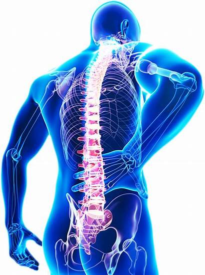 Glands Adrenal Benefits Chiropractic Pain Care