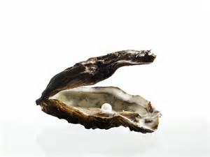 Oyster Shell with Pearl