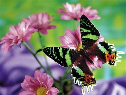 Butterfly Insects Animals Wallpapers Desktop Butterflies Pretty