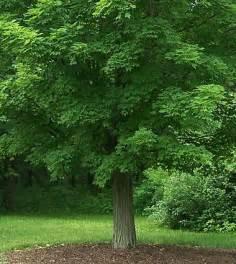 milwaukee tree removal stump removal services milwaukee wi