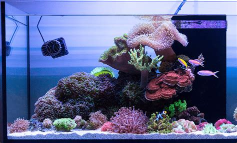 4 Best Sand for Reef Tank - 2020 (Top Picks) & Reviews