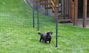 small dog fence dog fencing options With dog fencing options