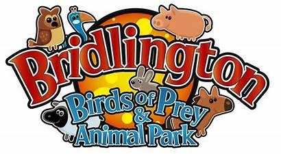 Park Prey Birds Animal Bridlington Forecast Weather