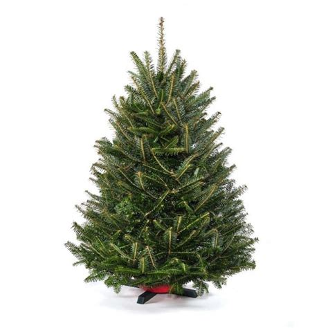 home depot real christmas trees cottage farms direct 2 5 ft to 3 5 ft freshly cut table top fraser fir real tree