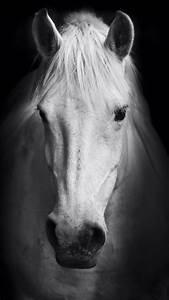 Black And White Horses Wallpaper | www.pixshark.com ...