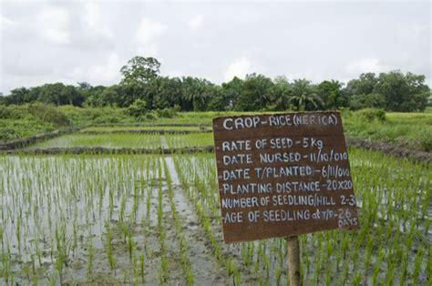 Sierra Leone: moving beyond subsistence farming
