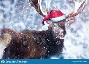 Funny, Deer, In, A, Santa, Hat, Winter, Christmas, Humorous, Image, Dreamland, Stock, Image